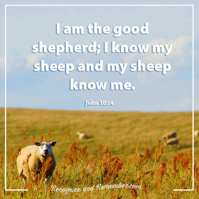 2016 Word and Scripture = Shepherd